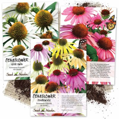 Seed Needs, Coneflower Seed Collection (3 Individual Packets)