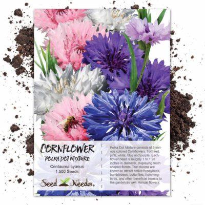 Seed Needs, Polka Dot Cornflower (Centaurea cyanus) 1,500 Seeds
